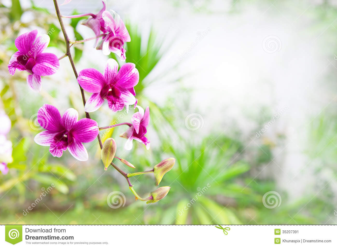 Pink Purple Orchid Flower Bouquet In Green Park With Copy