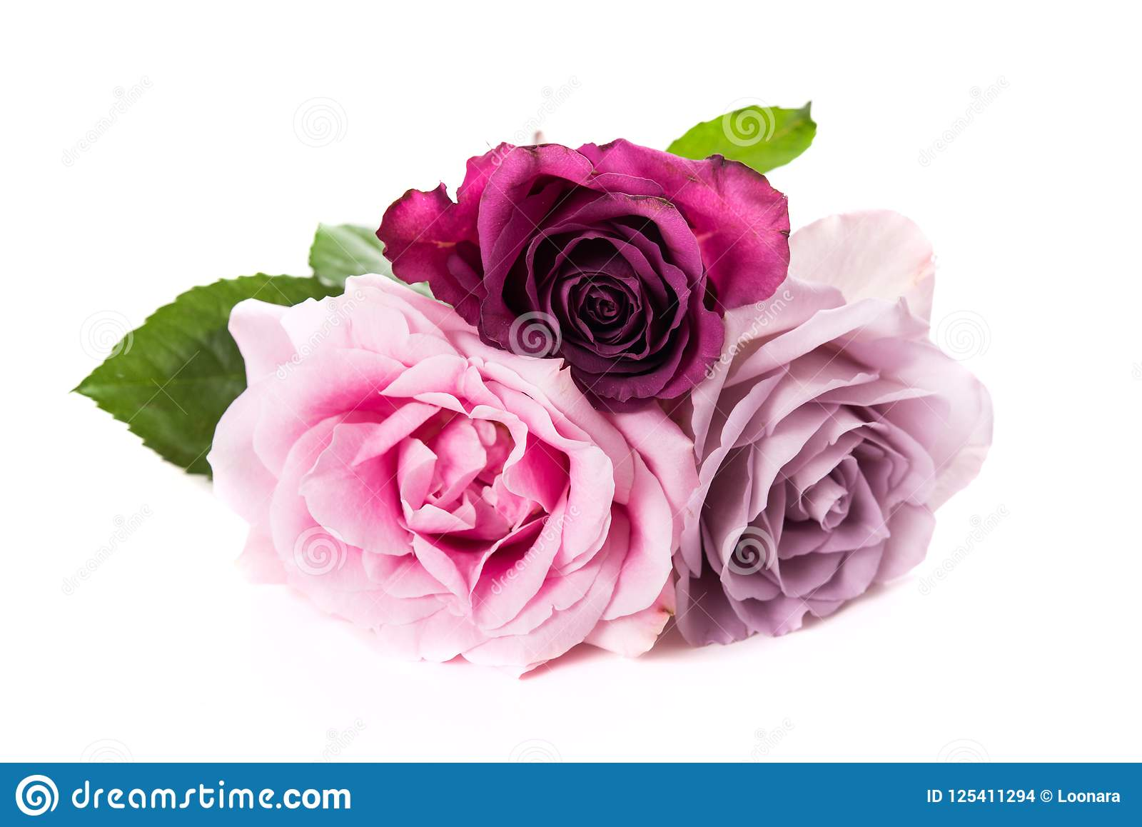 Pink And Purple Roses Isolated On White Background Stock Photo