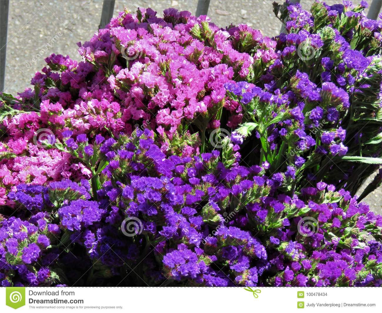 Pink And Purple Statice Flowers Stock Photo Image Of Flowers Sale