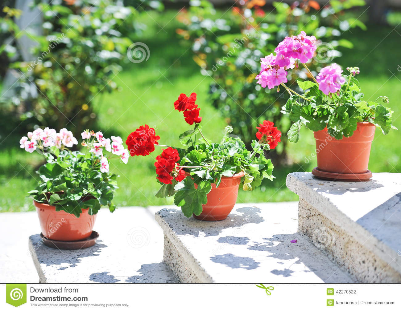 Pink And Red Flowers In Pots Ledge Stock Image