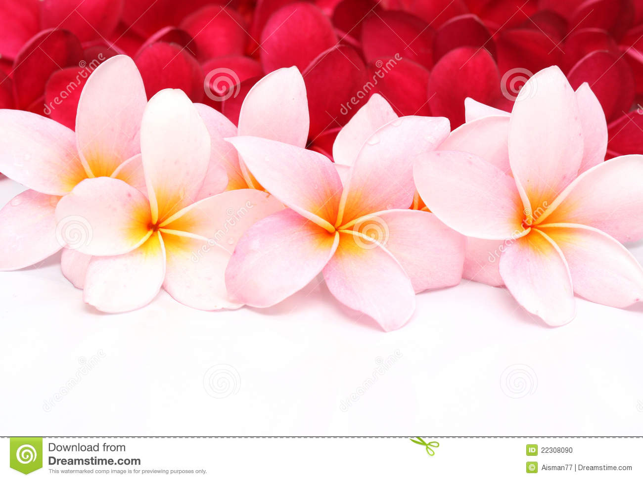 Pink plumeria flower hawaii royalty free stock photo image 25906175 pink and red frangipani plumeria flower stock photo dhlflorist Gallery