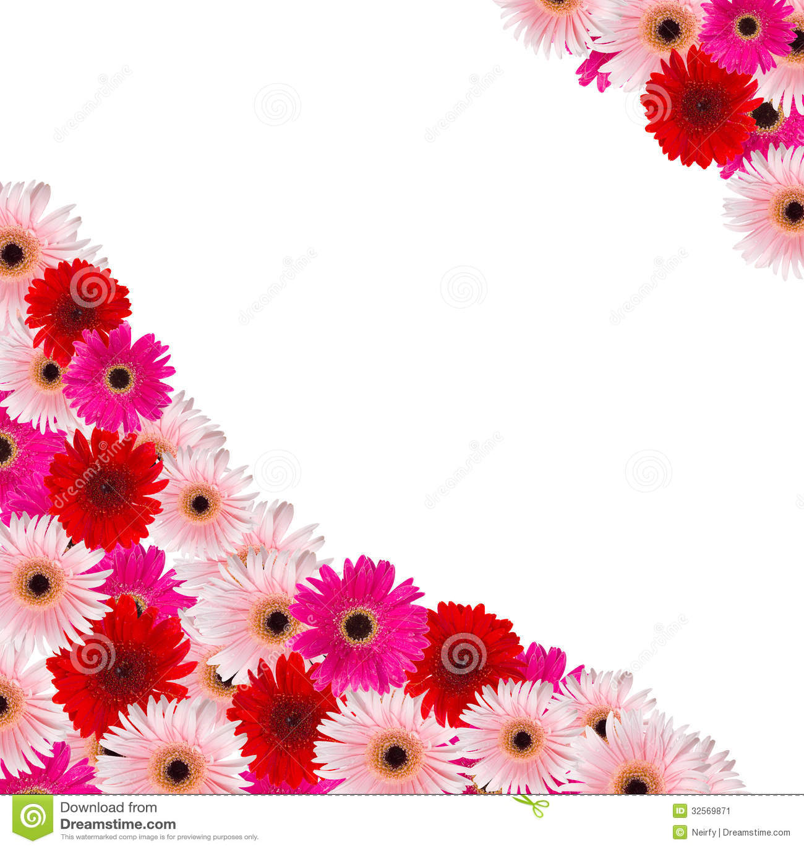 Pink and red herbera flowers border stock image image of bouquet pink and red herbera flowers border mightylinksfo