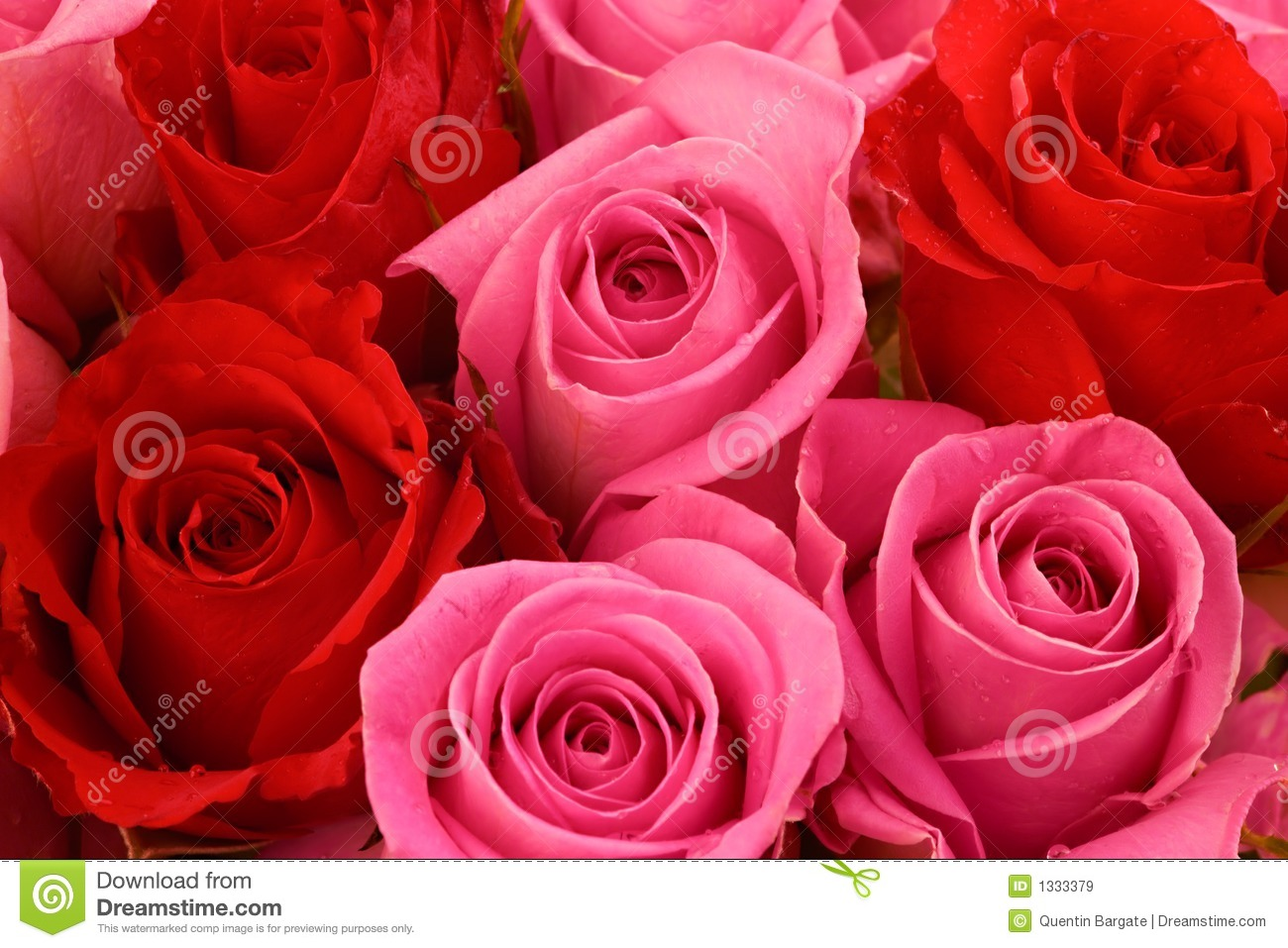 to the rose upon the rood of time essay To the rose upon the rood of time by william butler yeats red rose, proud  rose, sad rose of all my days come near me, while i sing the ancient ways.