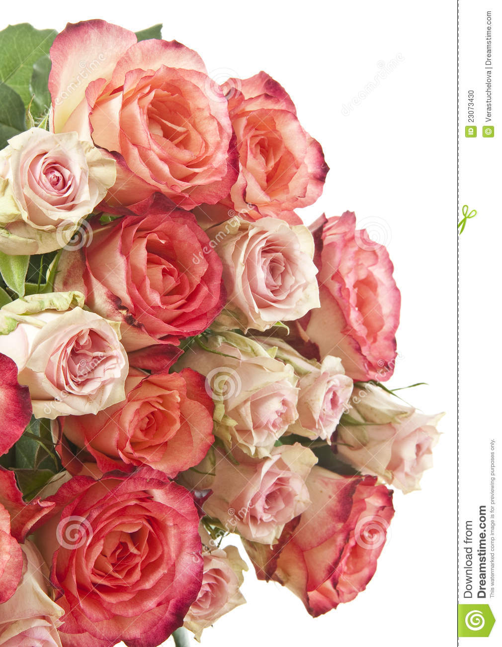 Pink and red roses in detail stock photo image 23073430 for Do black roses really exist