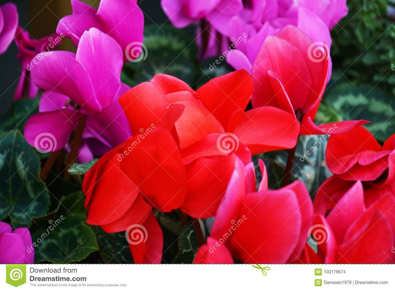 Pink Red Violet Flowers, Colorful Flowers And Leaves, Natural ...