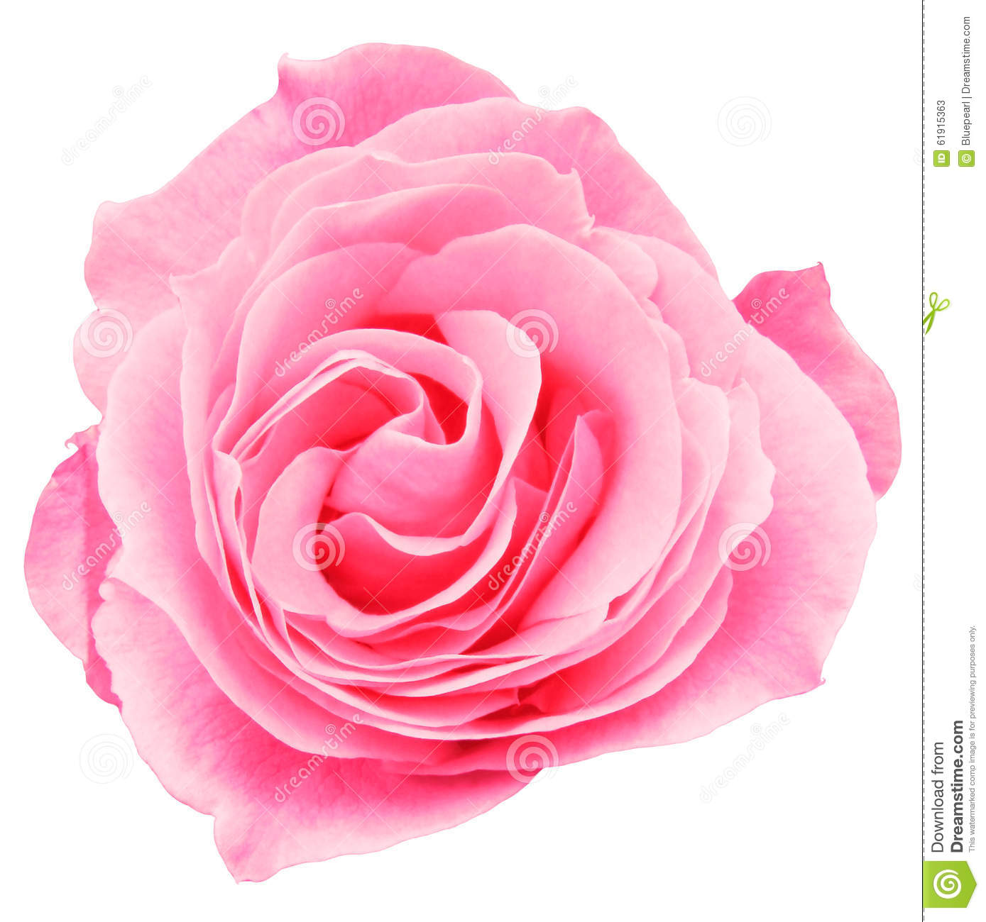swirly roses background bouquet - photo #11