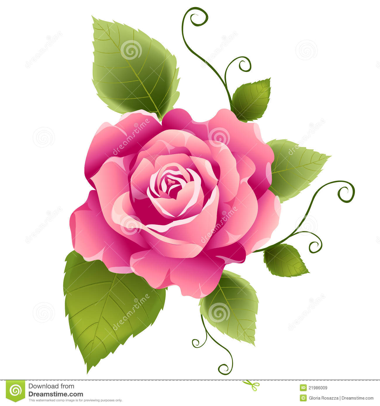 Pink Rose Design Royalty Free Stock Images Image 21986009