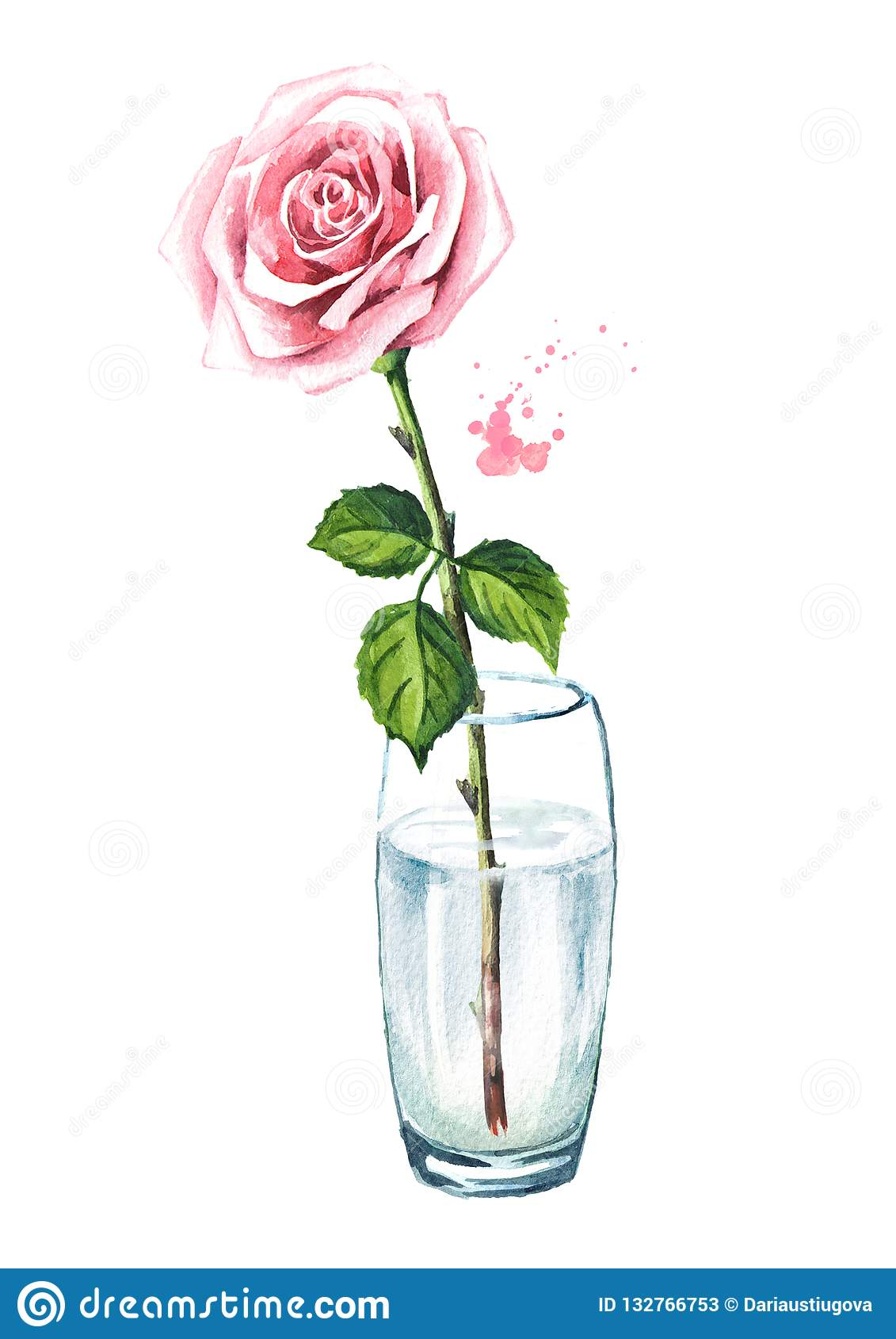 274 & Pink Rose Flower In A Glass Vase. Watercolor Hand Drawn ...