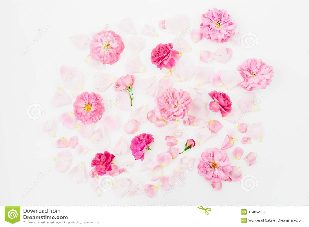 Pink rose flowers on white background. Flat lay, Top view. Flowers pattern texture.