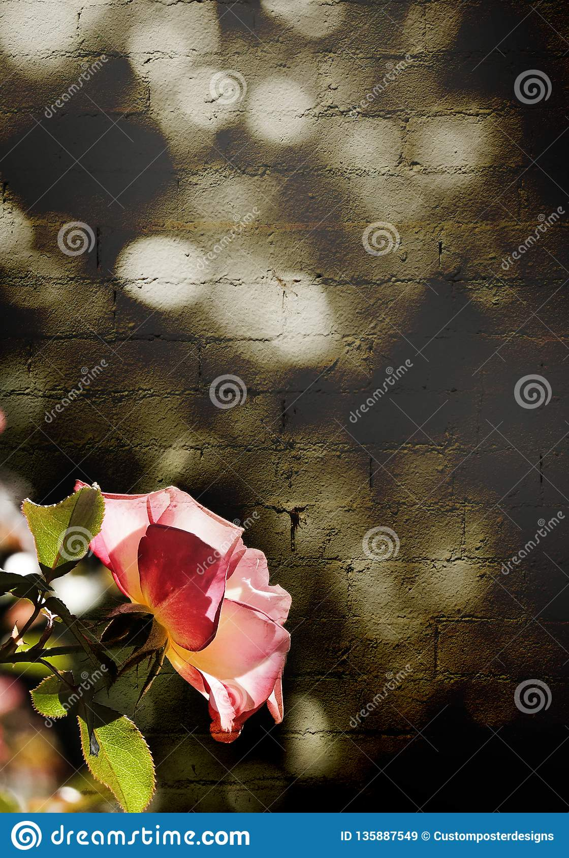 A pink rose in front of a brick wall in sepia.