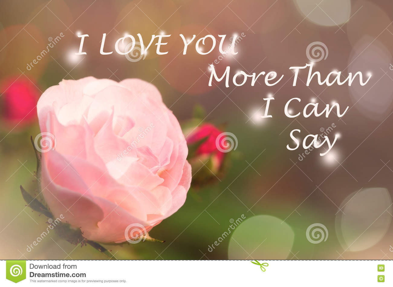 Free I Love You Quotes Pink Rose In Garden Stock Photoimage Of Background  80613796