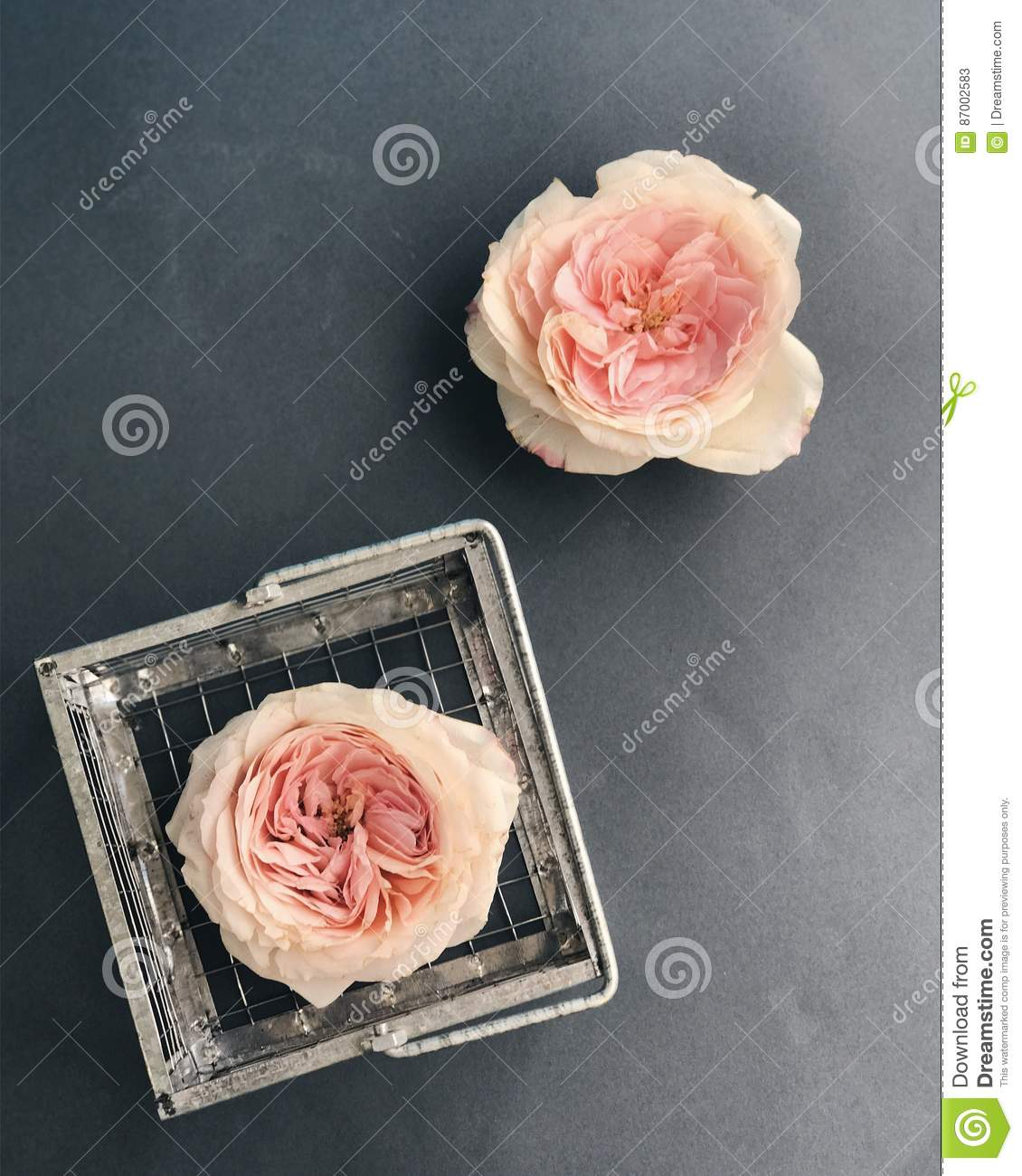 Pink Rose Heads Stock Image Image Of Bouquets Flower 87002583