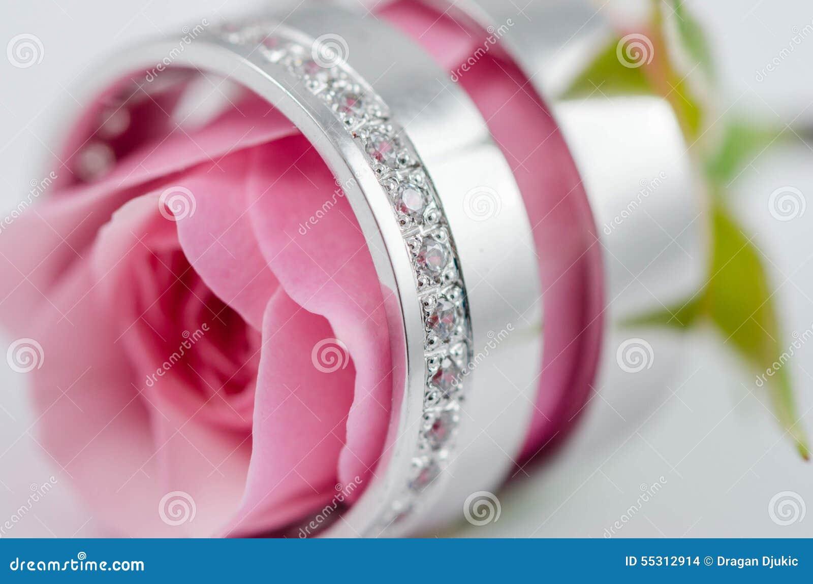 Pink Rose Inside Wedding Rings Stock Photo - Image of roses, light ...