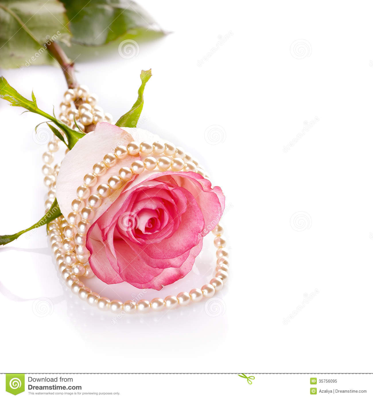 Pink Rose And Pearl Beads. Royalty Free Stock Photo ...
