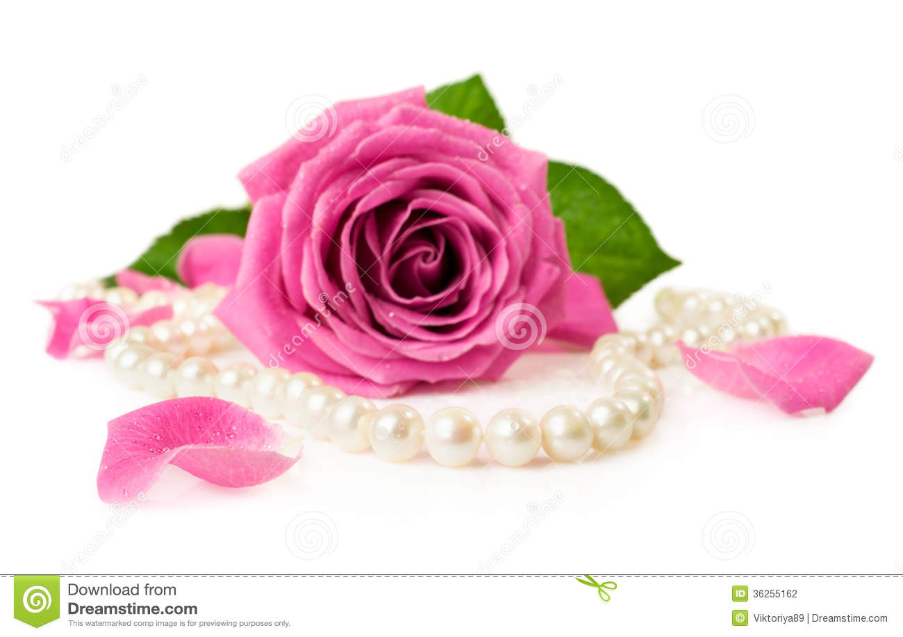 Pink Rose And Pearl Necklace Stock Photo - Image of ...