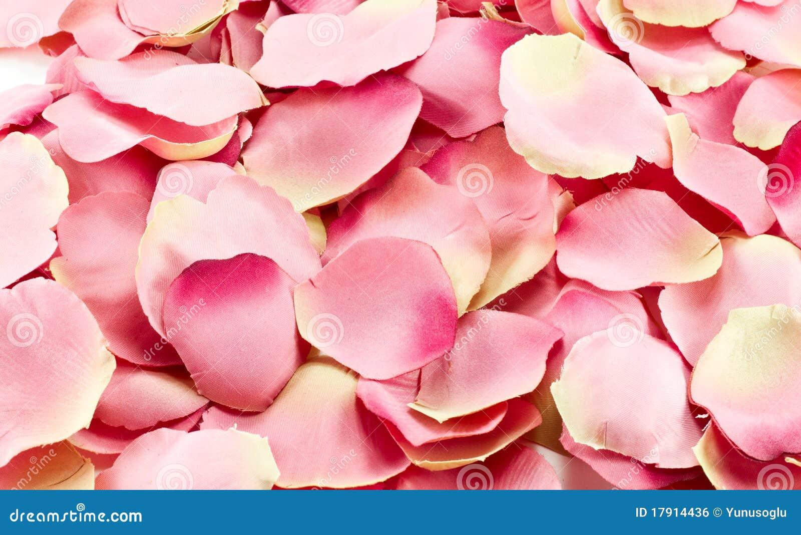 pink rose petals royalty free stock image image 17914436. Black Bedroom Furniture Sets. Home Design Ideas