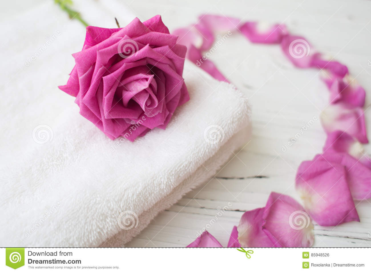 Pink rose and petals on white towel