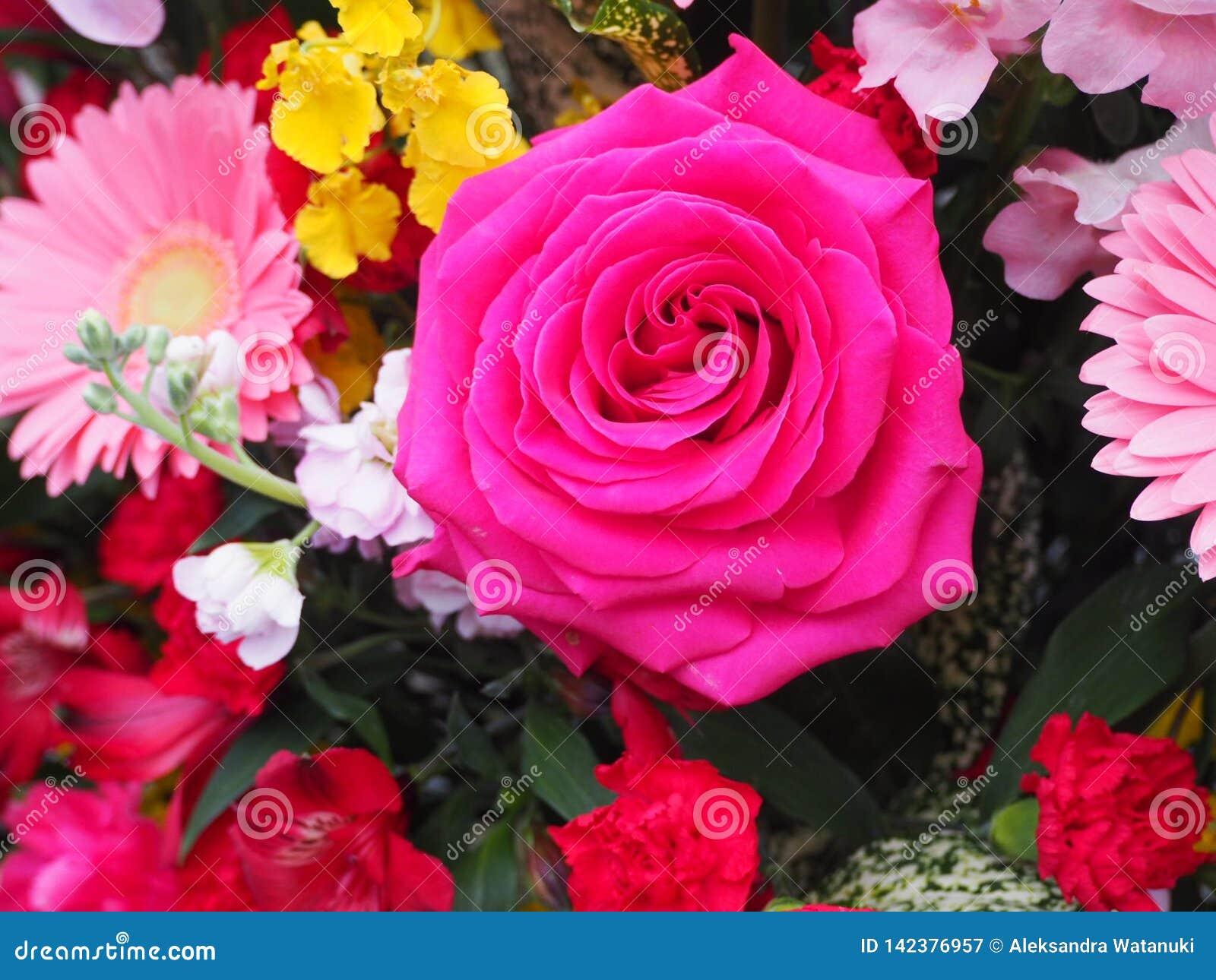 Pink Rose, Single Flower