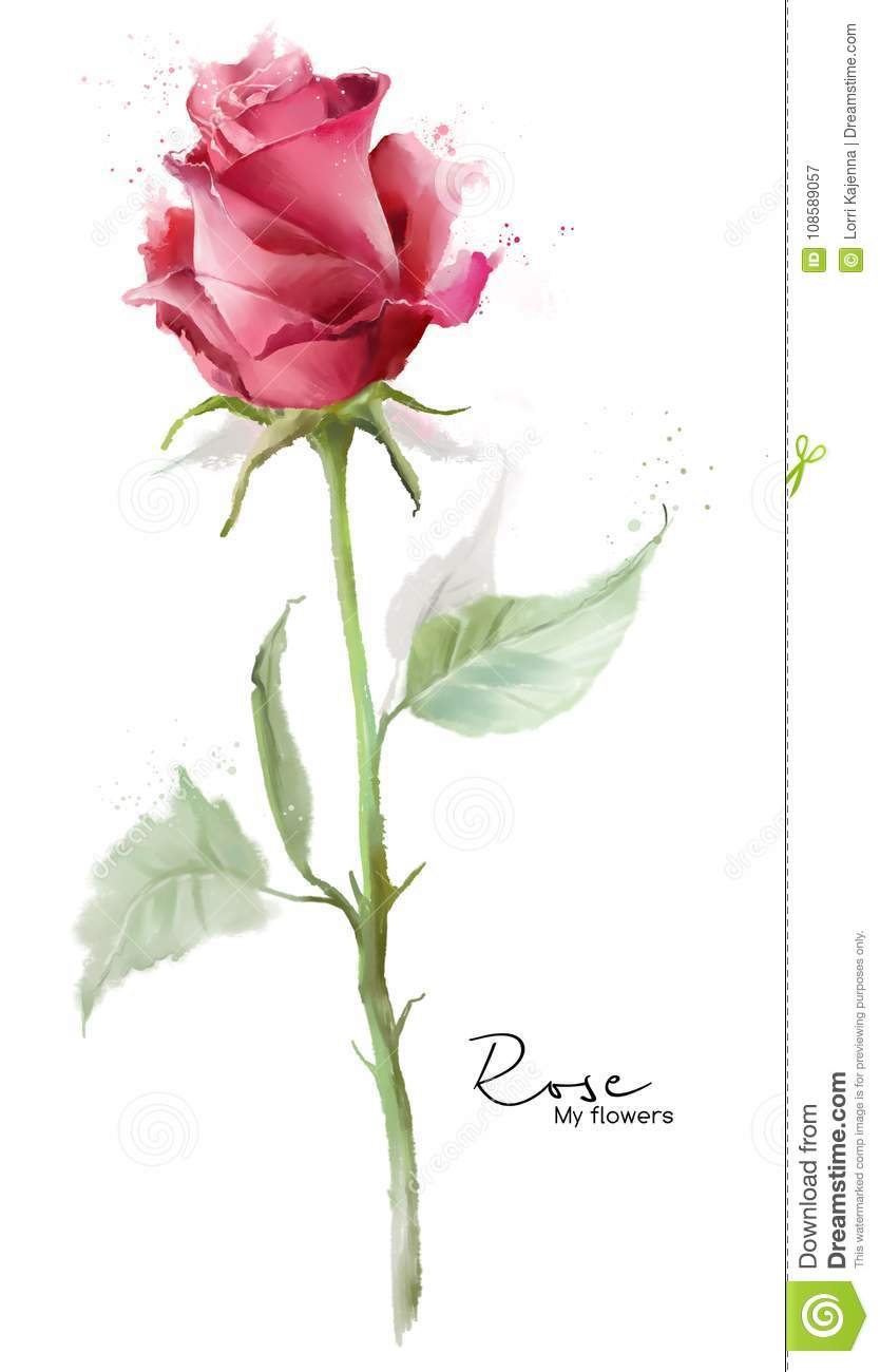 Pink rose and spray
