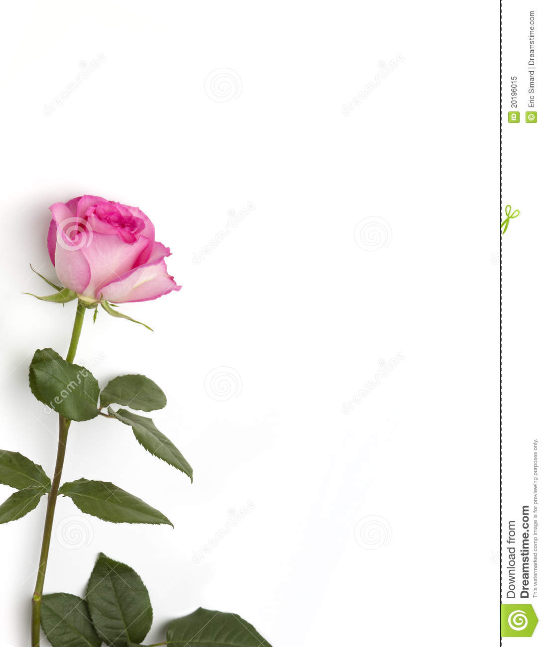 Pink Rose Stationary Stock Image Image Of Copy Page