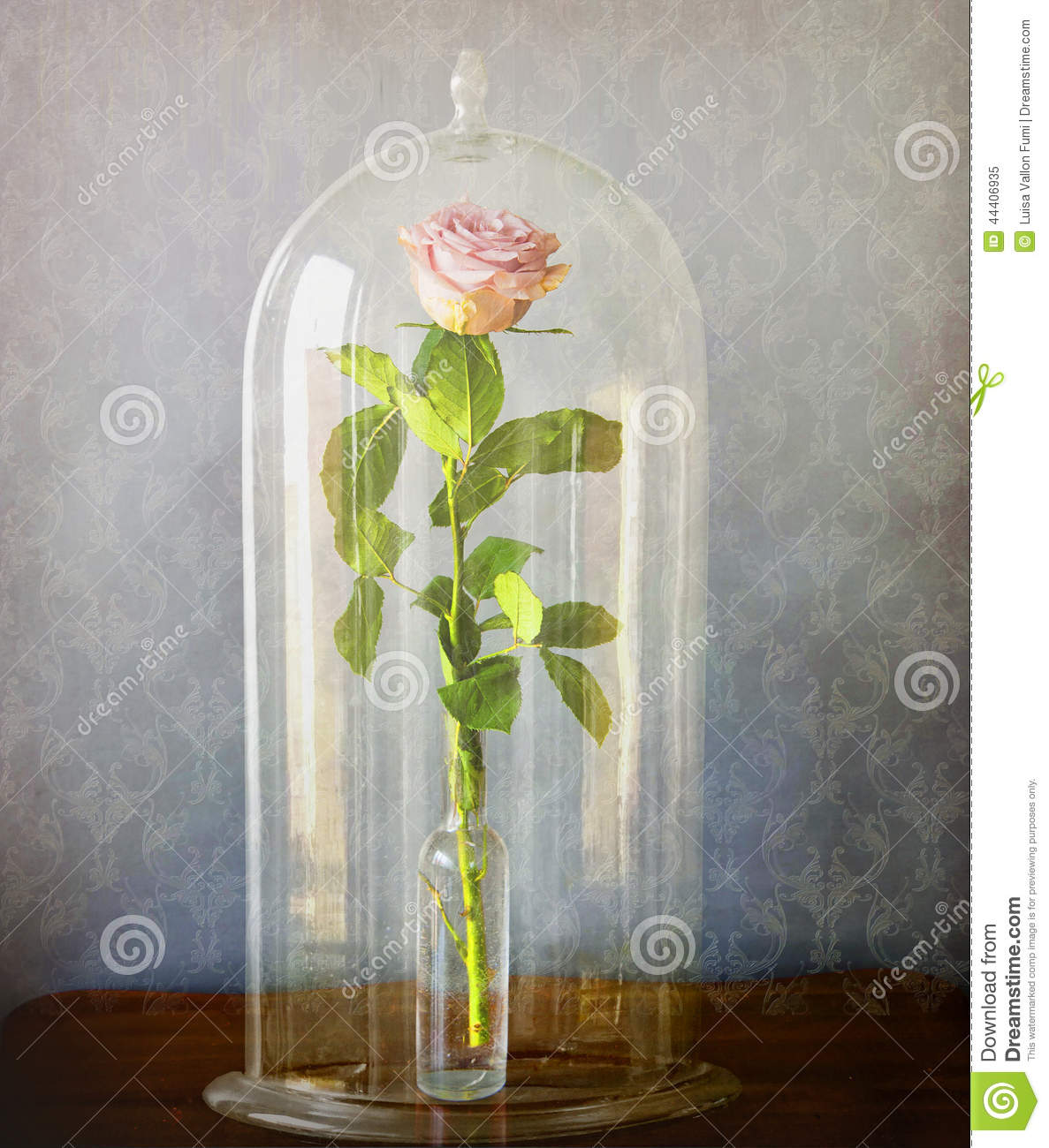 pink rose under glass bell jar stock photo image 44406935. Black Bedroom Furniture Sets. Home Design Ideas