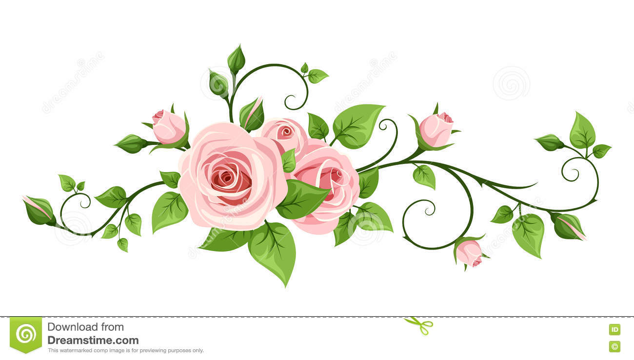 Pink Rose Vine. Vector Illustration. Stock Vector