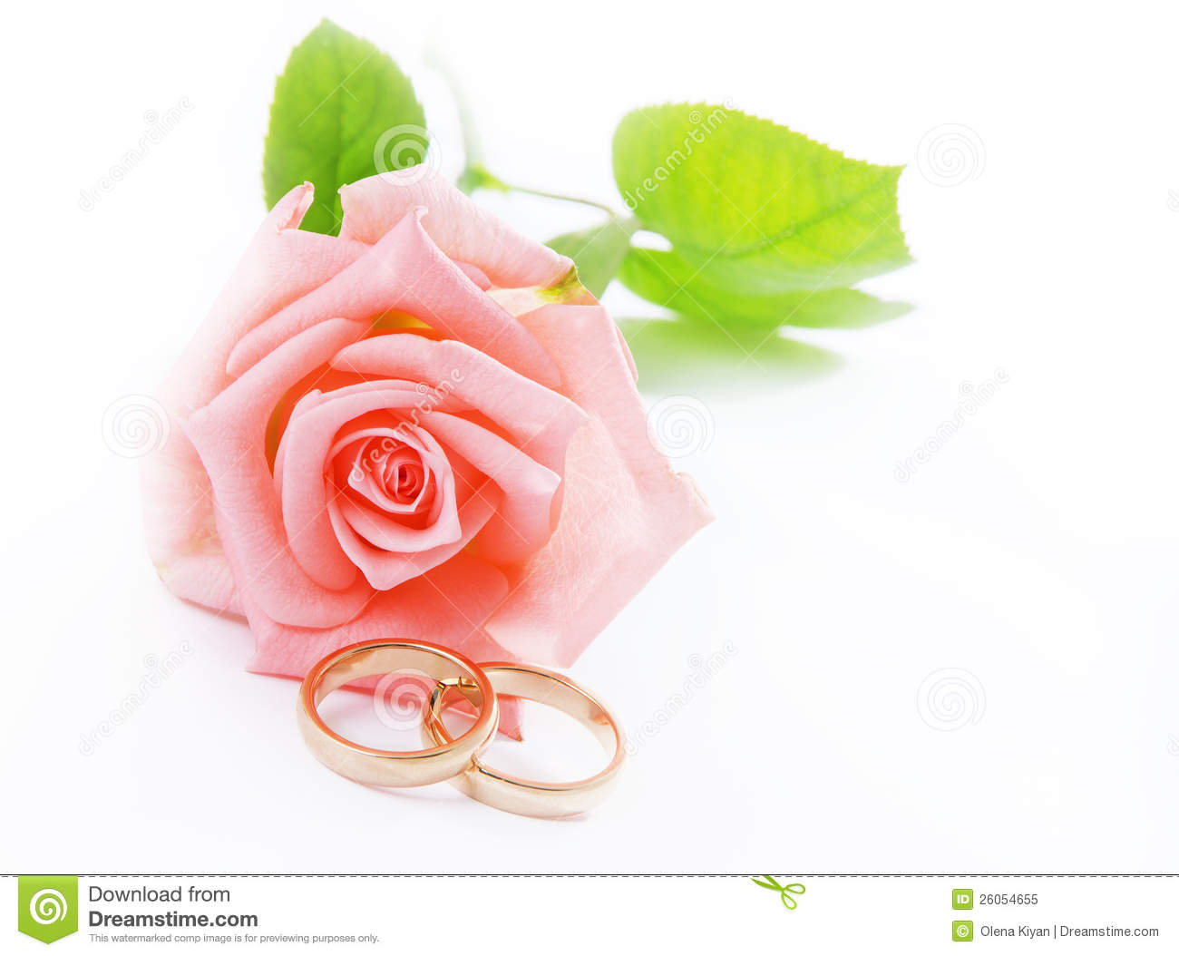 Pink Rose Amp Wedding Rings Royalty Free Stock Photo Image