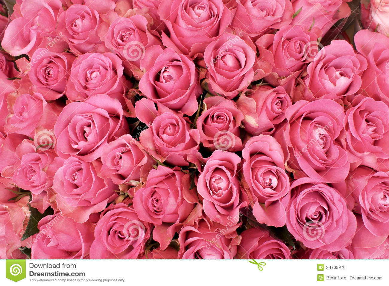 makeup valentine's day cards - Pink Roses Stock Image