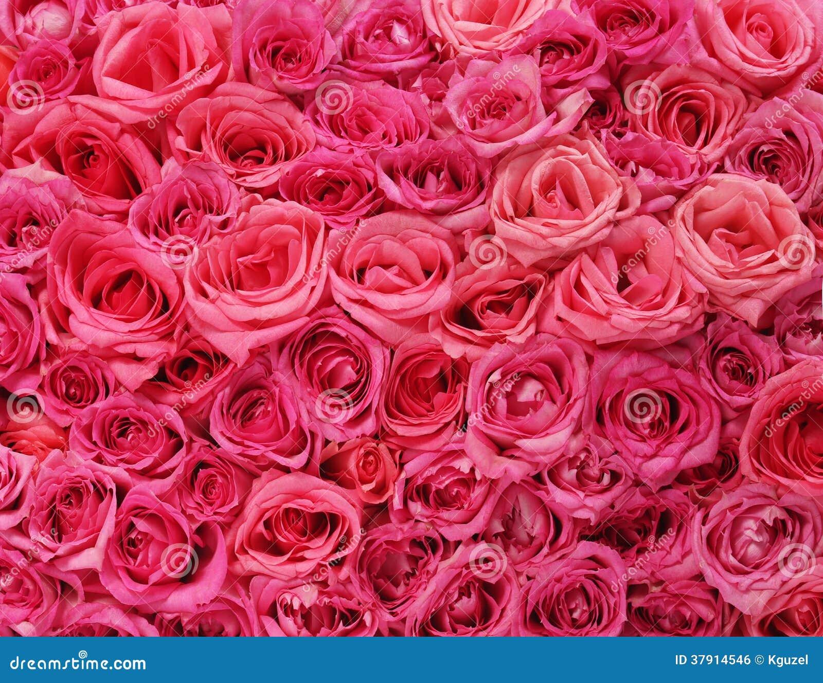 Hot pink flowers background lektonfo hot pink flowers background pink roses background mightylinksfo