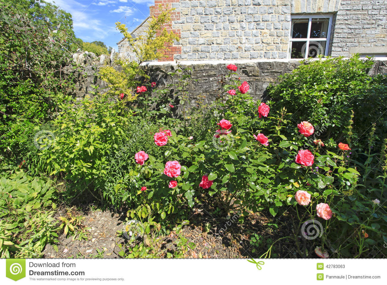 Pink Roses In A Country Garden