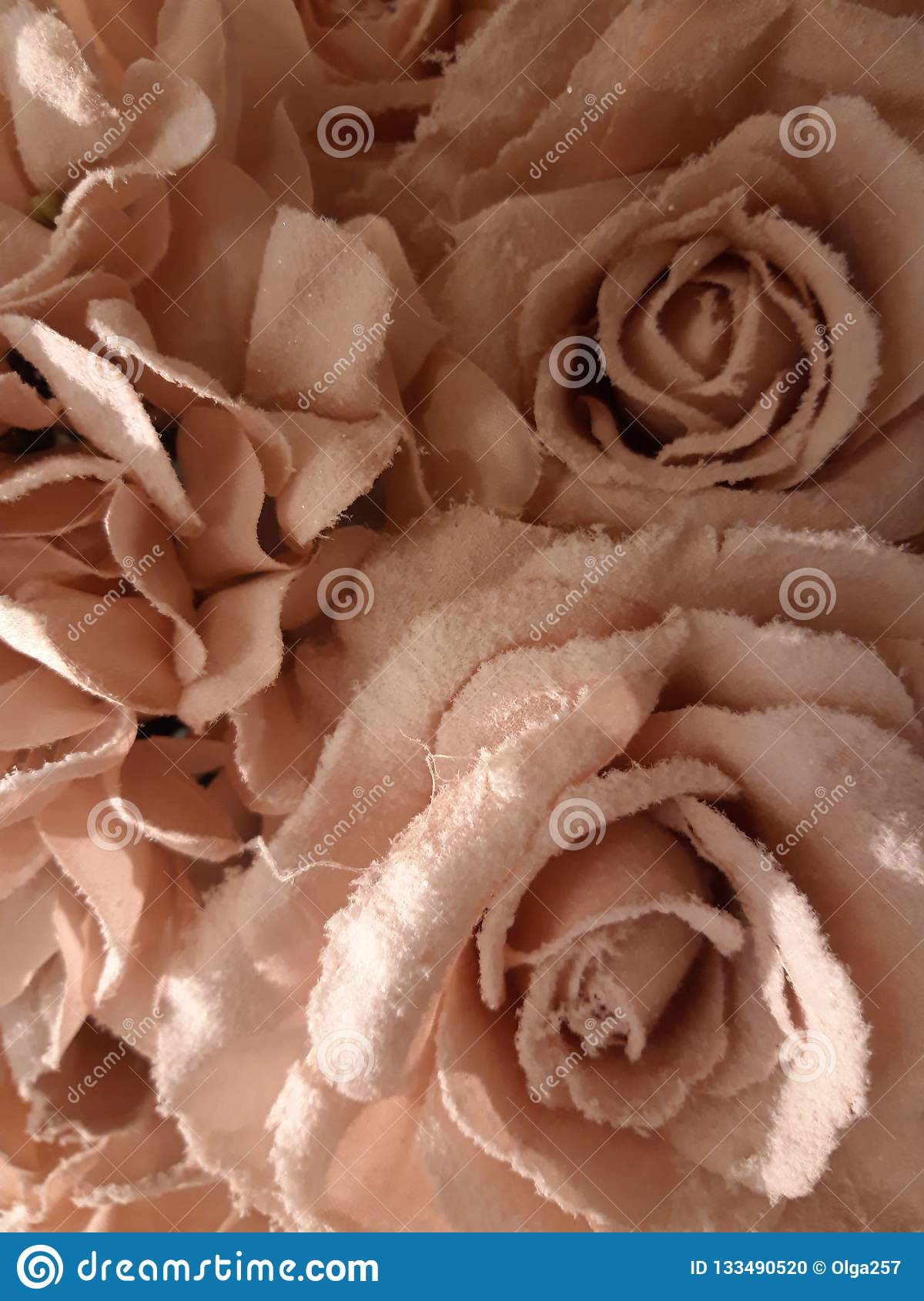 Pink roses covered with white frost