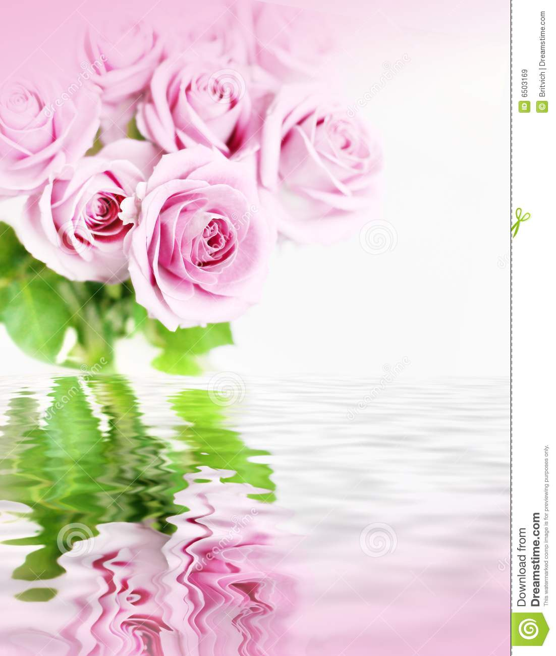 Pink roses in flood