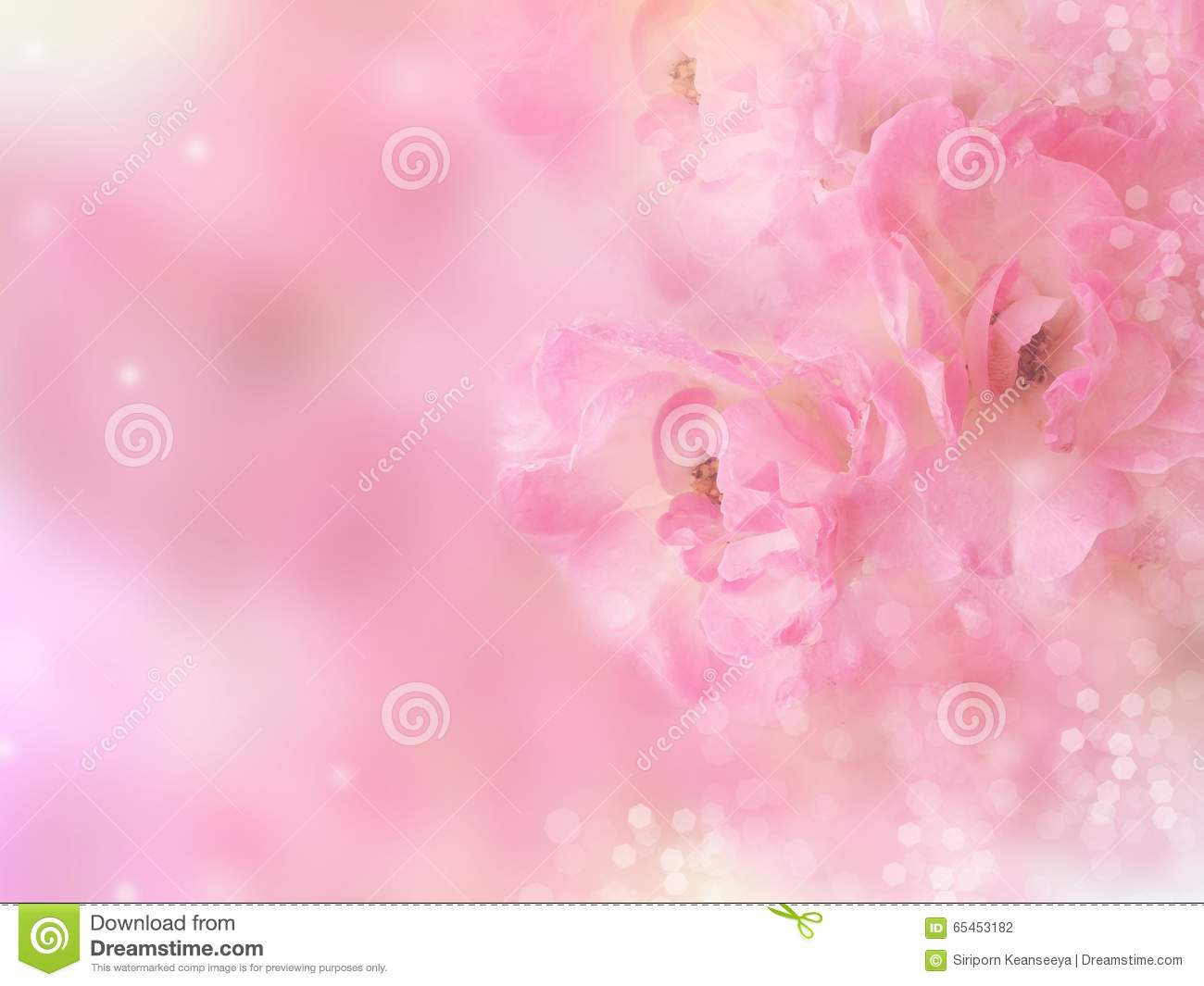 Pink Roses Flower Border With Bokeh Blur Background Stock ...