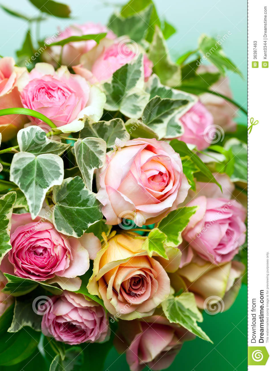 Pink Roses And Green Ivy Stock Image Image Of Pink Petal 36387463
