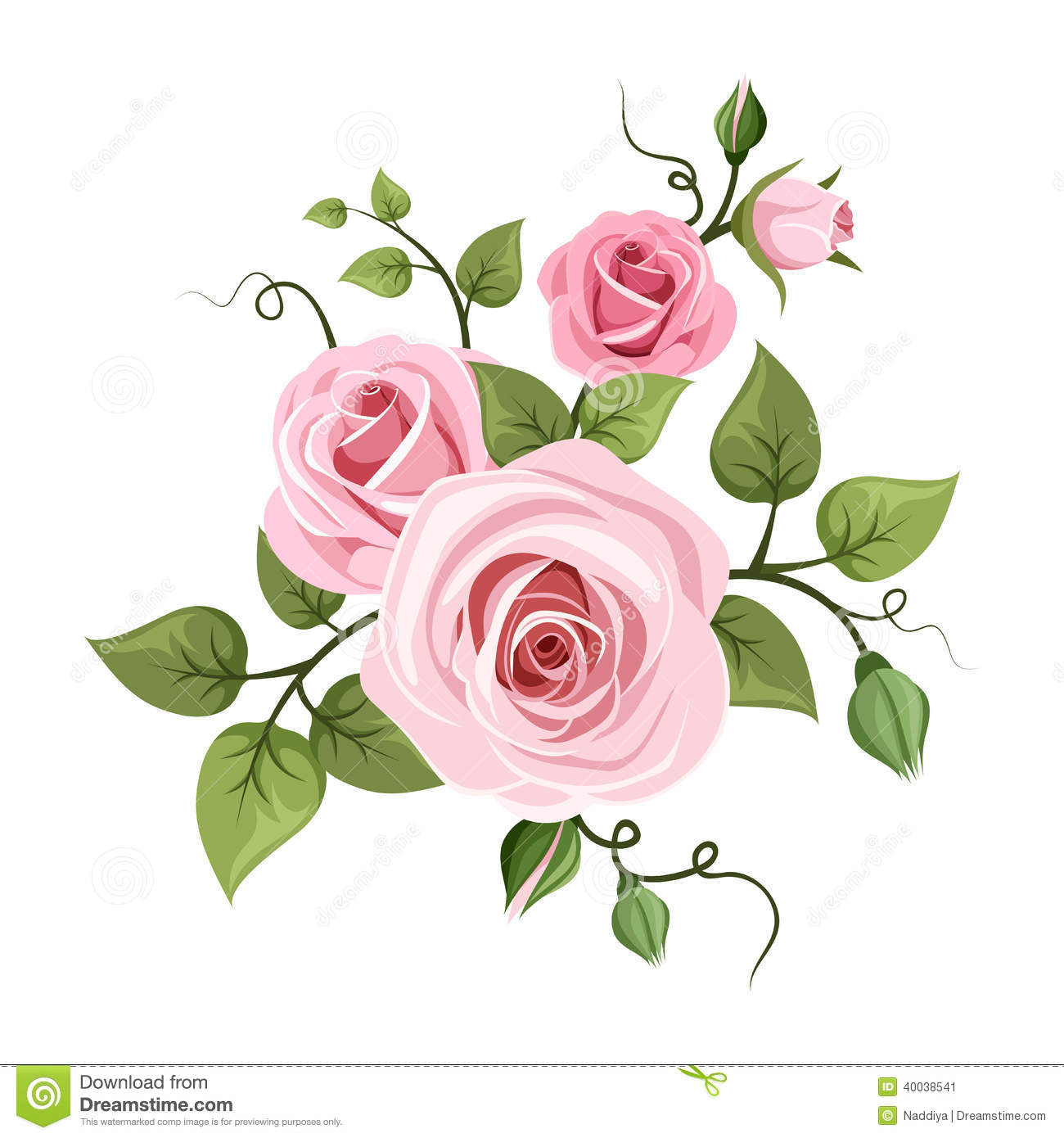 Pink Roses Vector Illustration Stock Vector Image