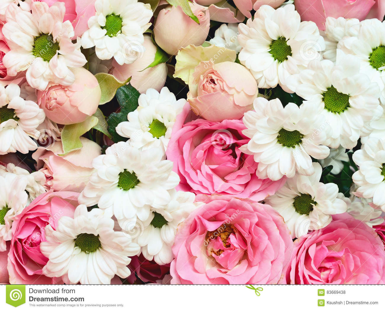 Pink Roses And White Daisy Flowers Bouquet Stock Photo Image Of