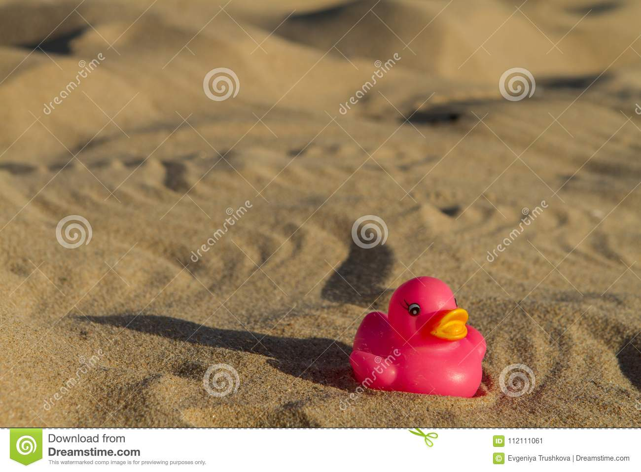 Toy Duck On The Beach In The Sand Close Up Stock Image - Image of ...
