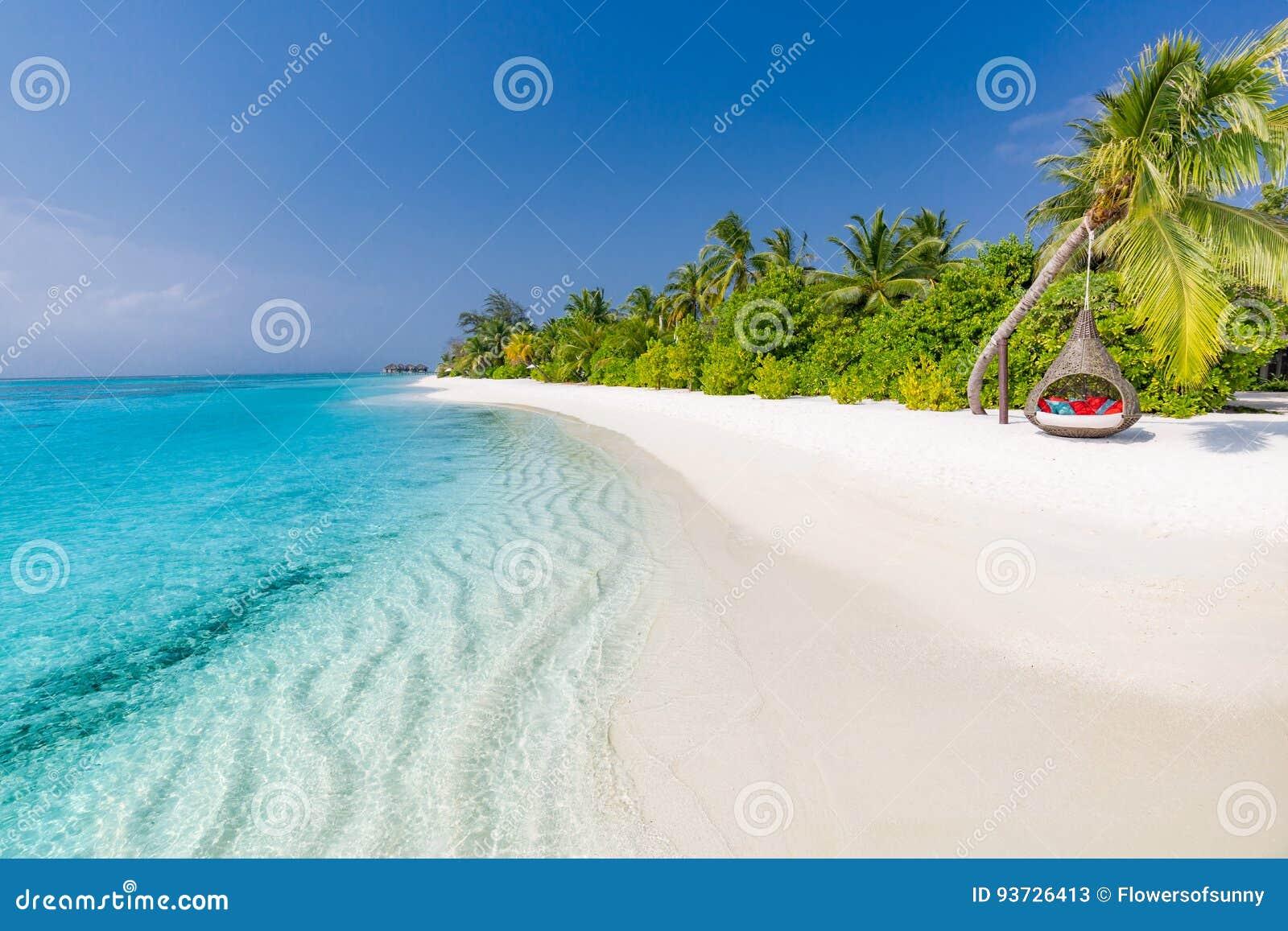 Pink scallop seashell ландшафт пляжа красивейший место природы тропическое Пальмы и голубое небо Концепция летнего отпуска и кани