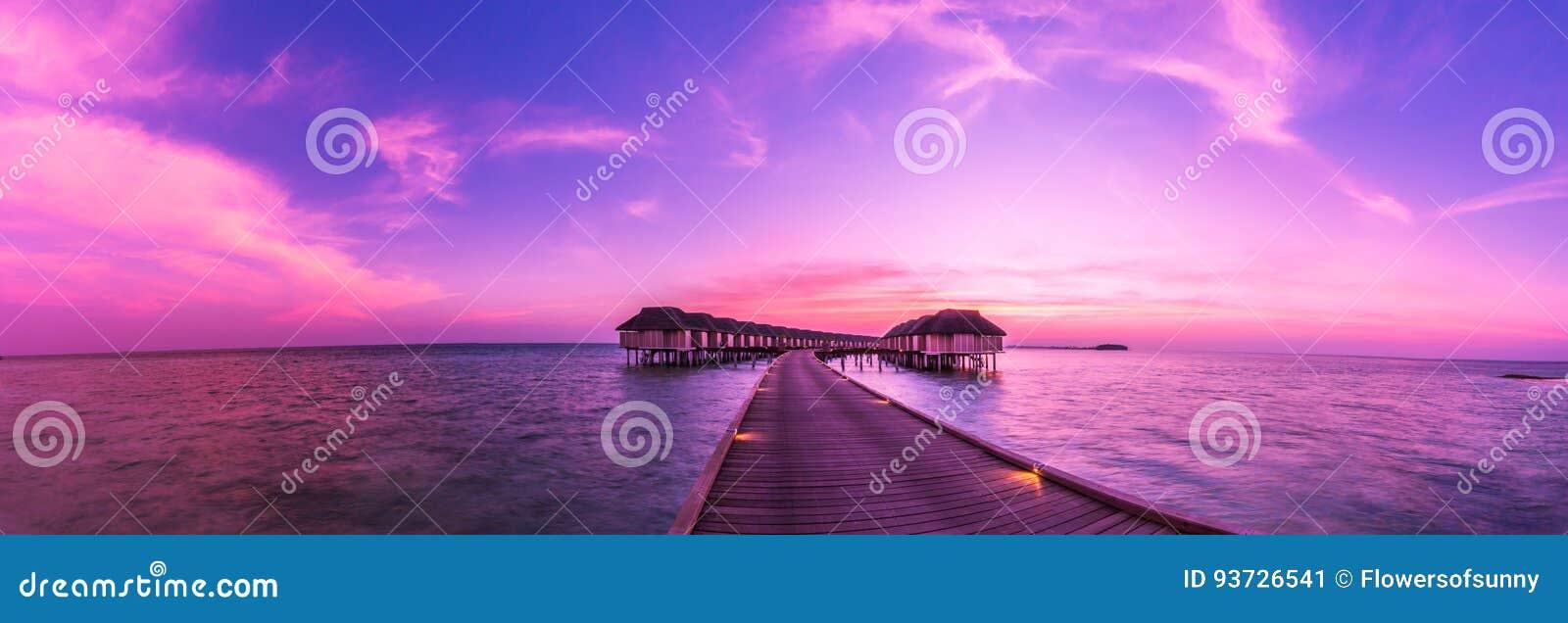 Pink scallop seashell 海滩美好的横向 热带本质的场面 棕榈树和蓝天 暑假和假期概念