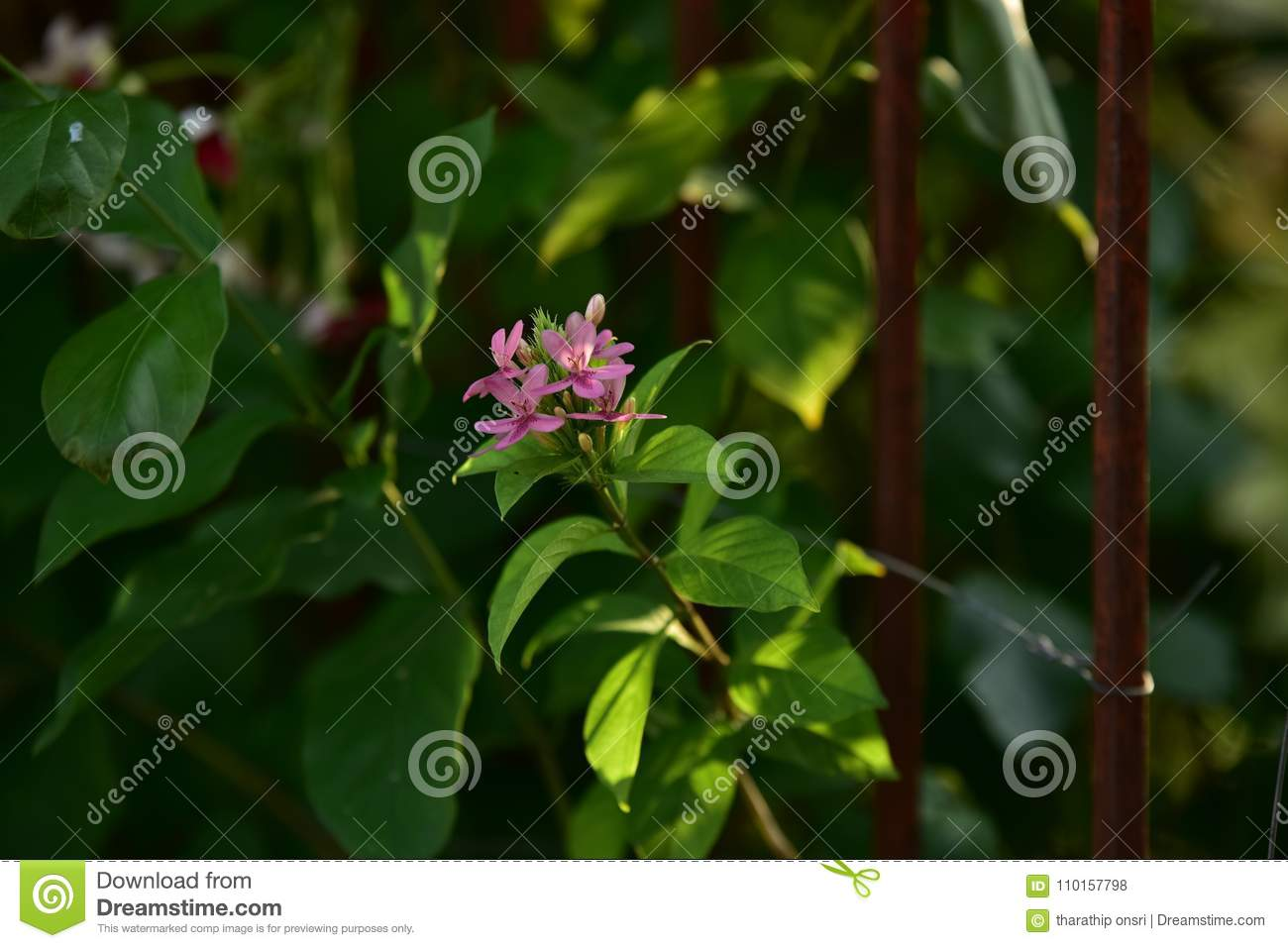 Pink Small Flower And Tree At Sunset Stock Photo Image Of Herb
