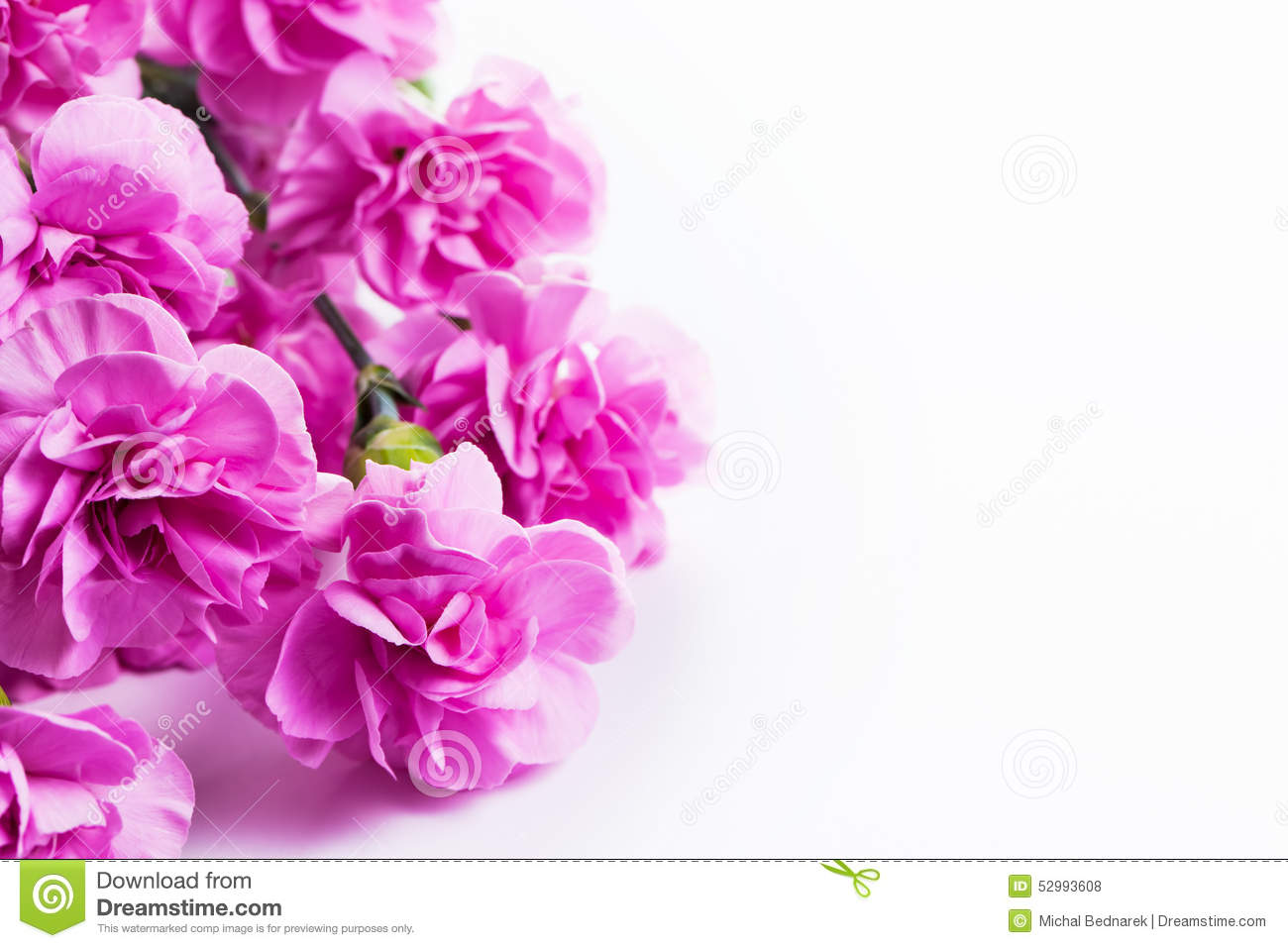 Pink Soft Spring Flowers Bouquet On White Background Stock Photo