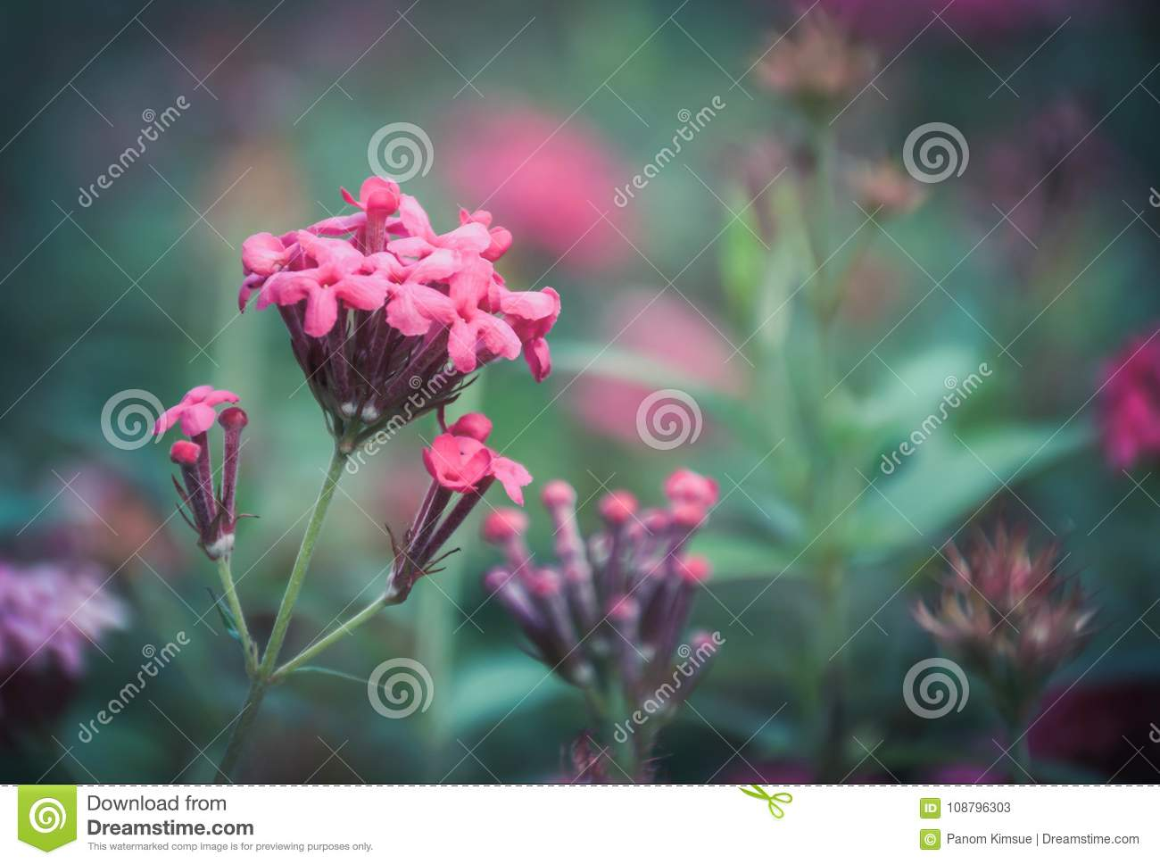 Pink Spike Flower In The Garden With Green Background Stock Image