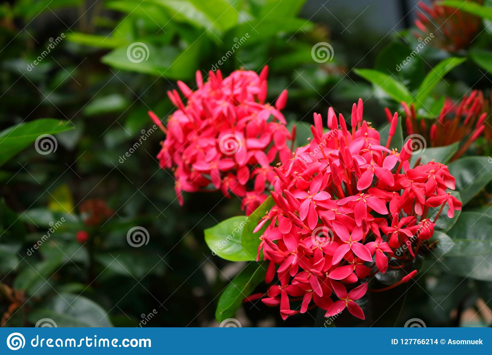 Pink Spike Flower Story Stock Photo Image Of Flower 127766214