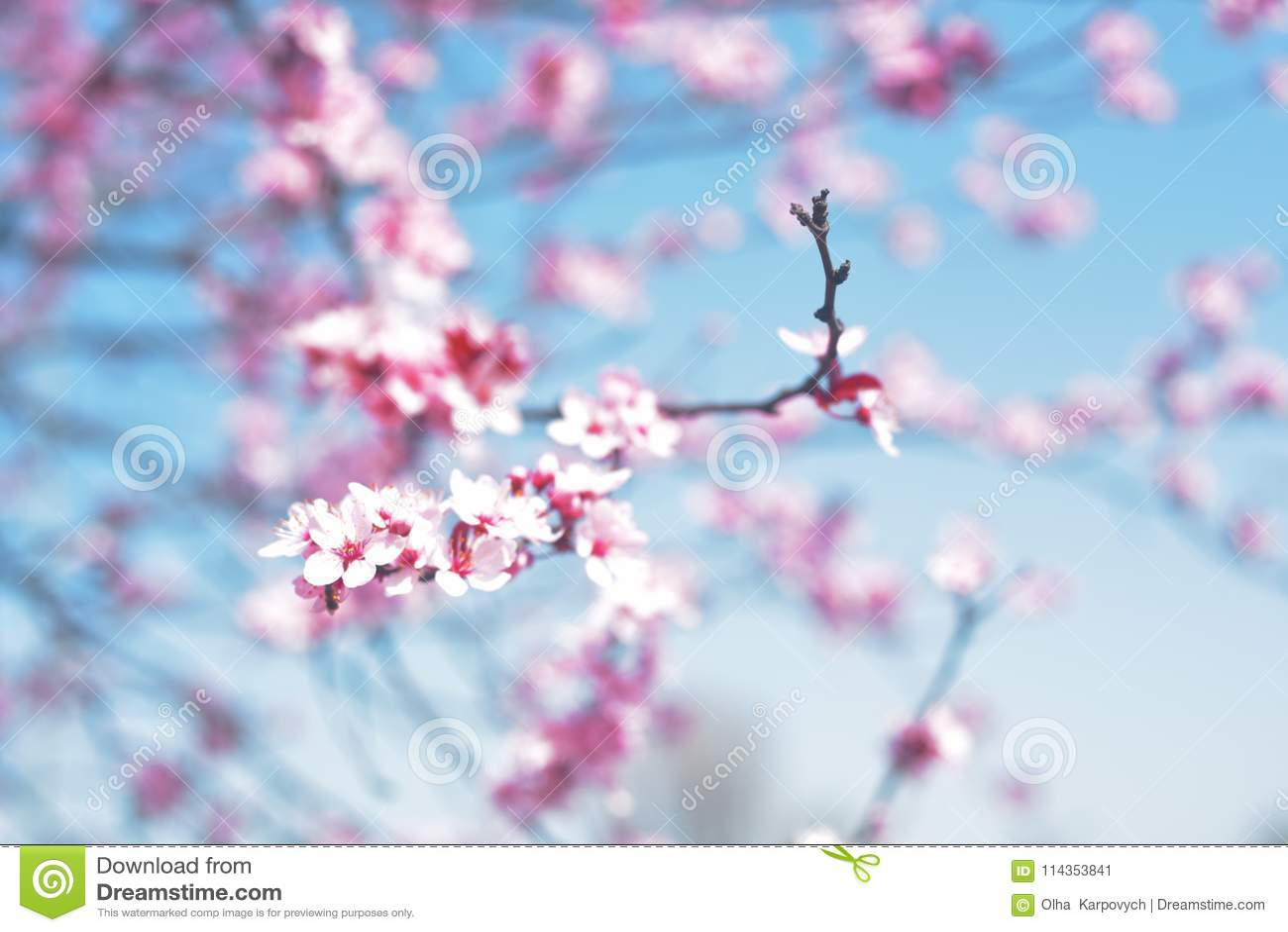 Pink Spring Flowers Blue Sky Springtime Spring Blossom Background