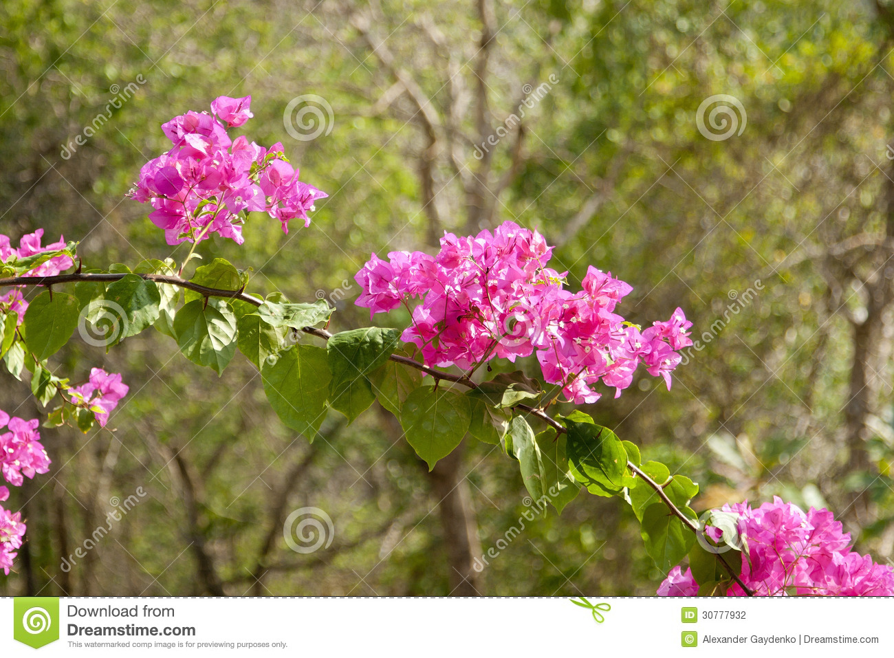 Tree With Small Pink Flowers Choice Image Fresh Lotus Flowers