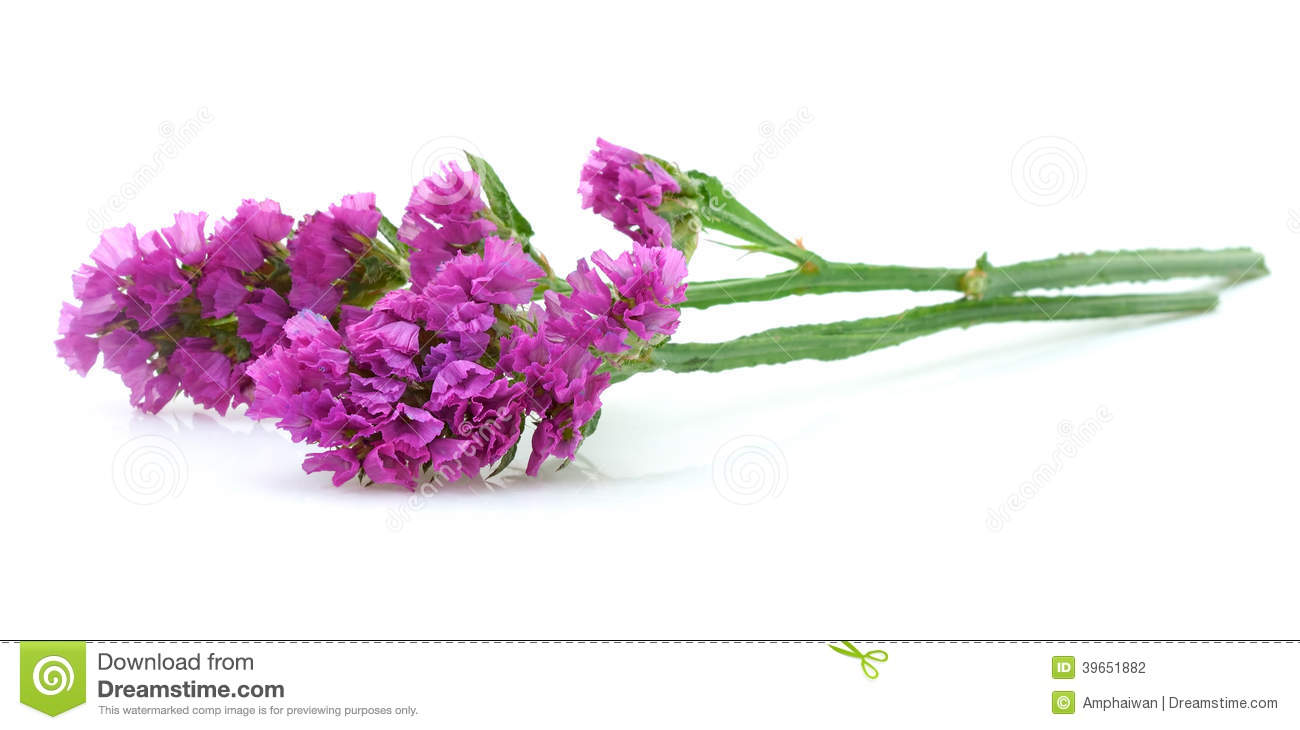 Pink statice flower stock photo image of flower mediterranean pink statice flower mightylinksfo