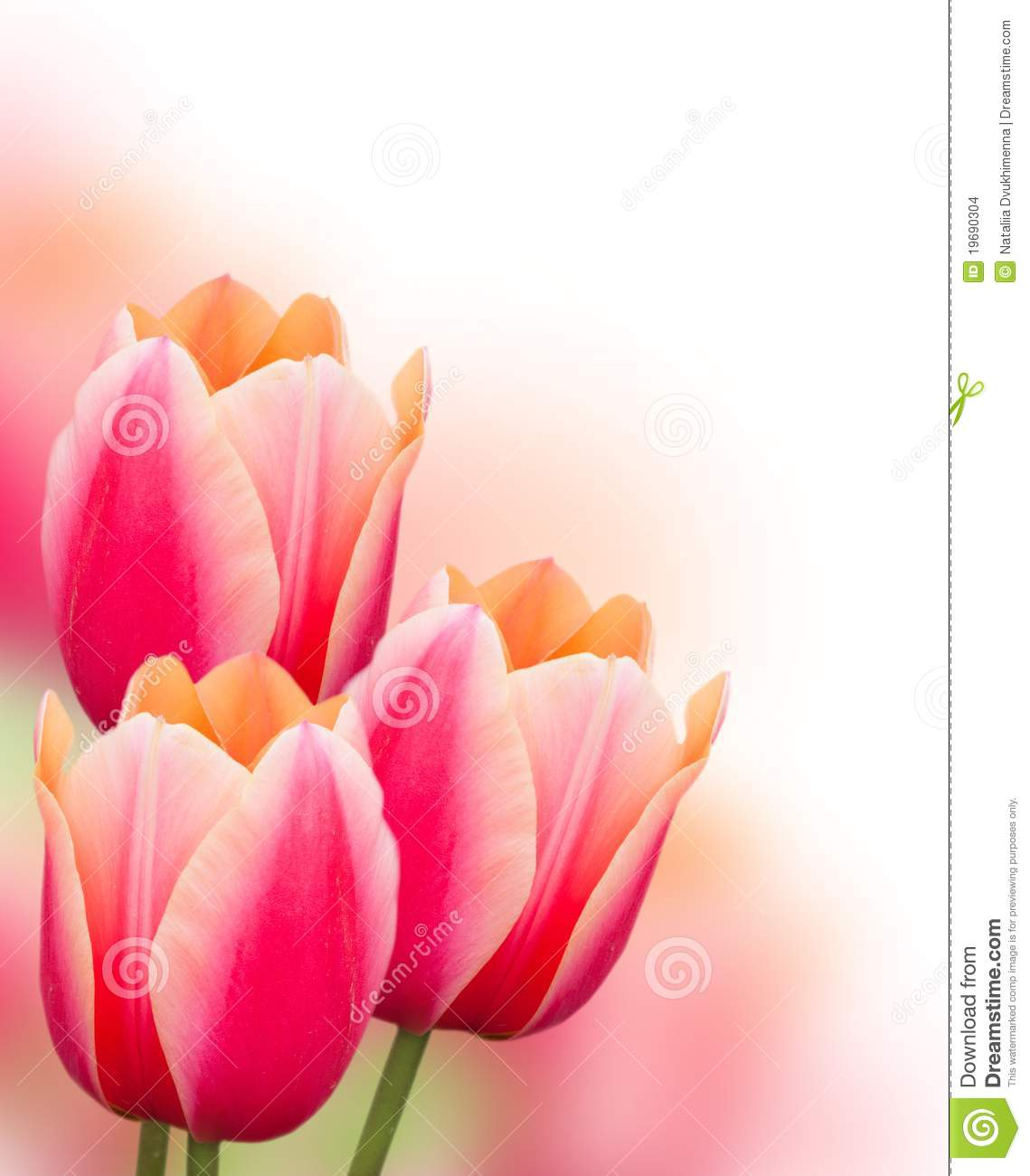 More similar stock images of ` Pink tulip flowers background `