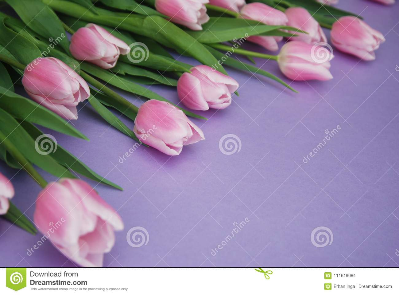 Pink Tulips bouquet, over Purple Background with copy space. Top view. flat Lay. Spring time.