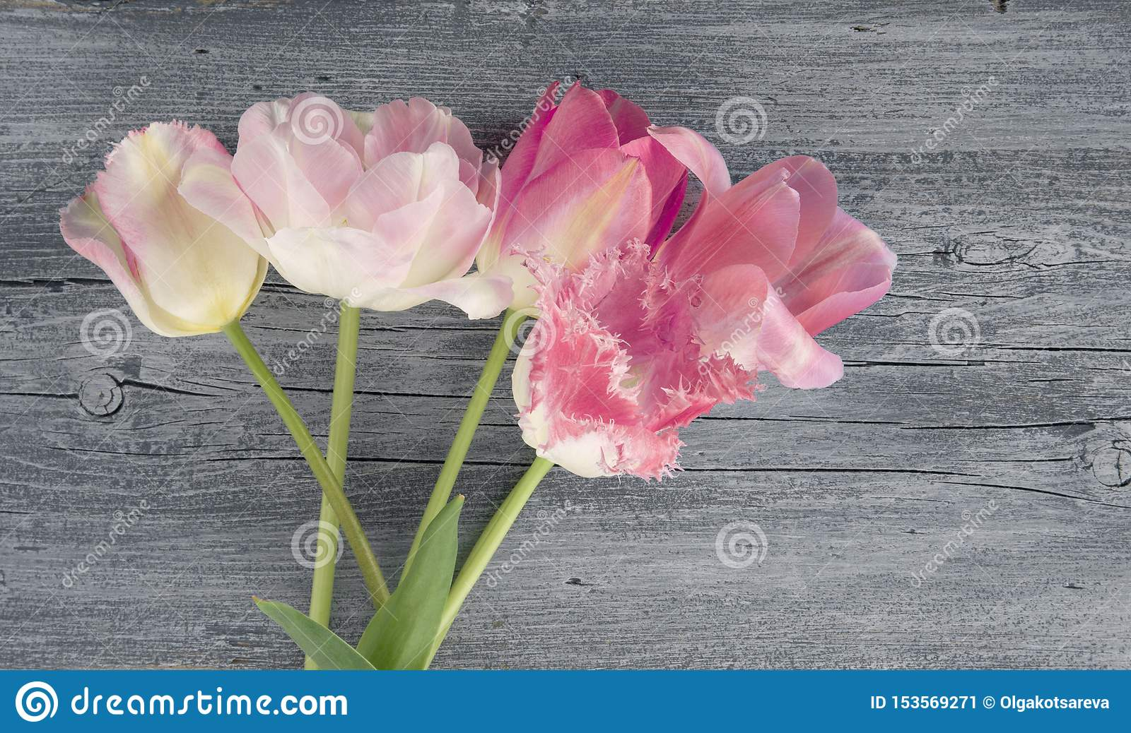 Pink tulips flowers bouquet on wooden rustic blue table background for mothers day card or holiday, copy space, top view