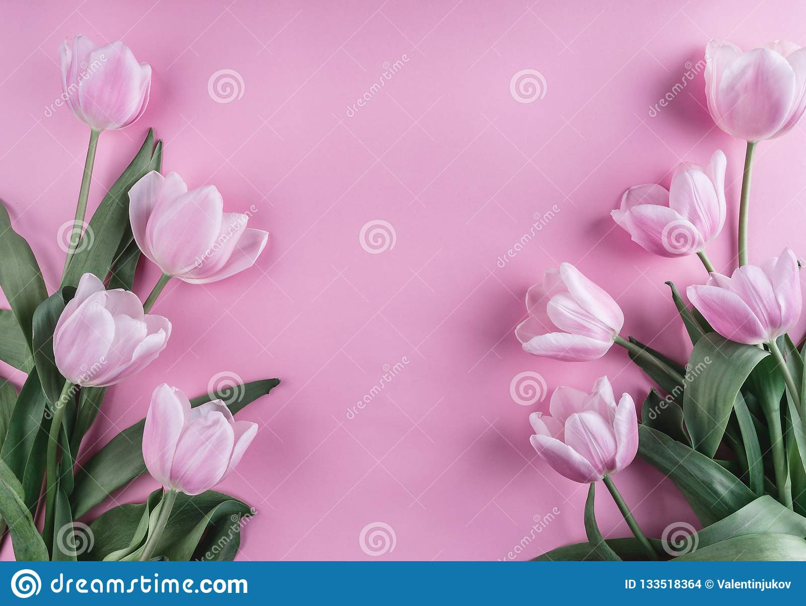 Pink tulips flowers over light pink background. Greeting card or wedding invitation. Flat lay, top view